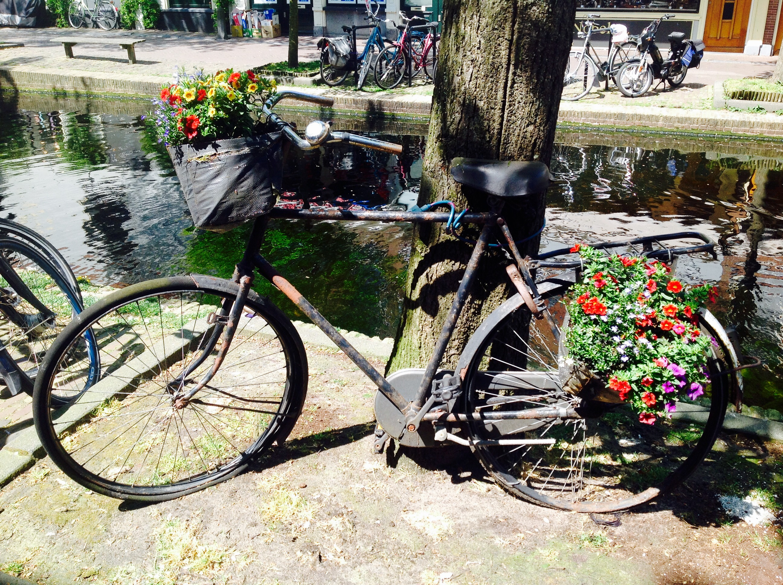 オランダ移住視察で見た「自転車大国」
